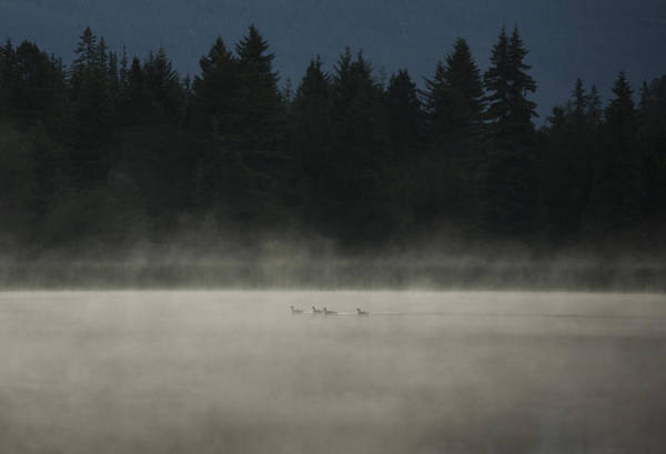 Duck Hunt Photograph - Under Cover by Aaron Bedell