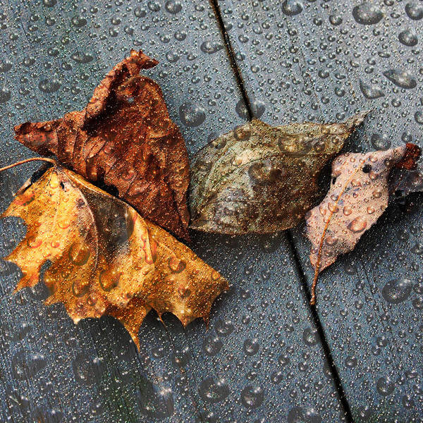 Photograph - Under Rain by Randi Grace Nilsberg
