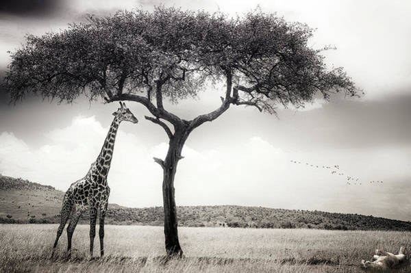 Tall Photograph - Under The African Sun by Piet Flour