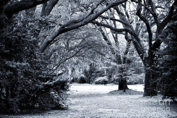 Photograph - Under The Live Oak by John Rizzuto