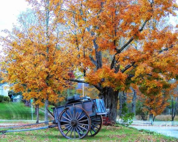 Photograph - Under The Maple Tree by Marcia Lee Jones