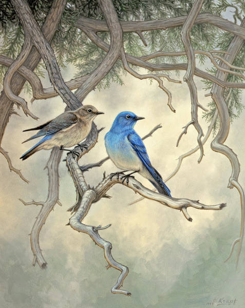 Songbird Painting - Under The Old Juniper-mountain Bluebirds by Paul Krapf