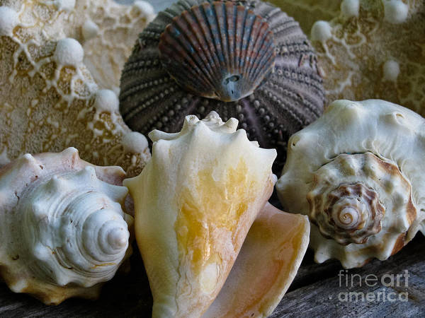 Kammerer Wall Art - Photograph - Under The Sea by Colleen Kammerer