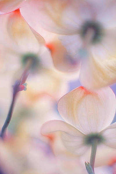 Soft Color Photograph - Under The Skirts Of Flowers by Francois Casanova