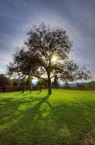 Photograph - Under The Sunlit Tree by Ivan Slosar