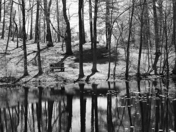 Conn Wall Art - Photograph - Under The Tall Trees by Luke Moore