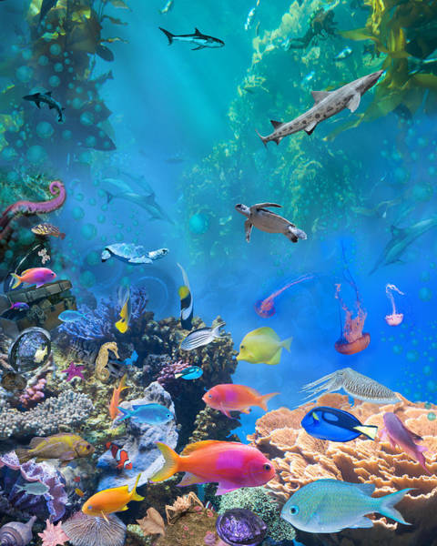 Wall Art - Photograph - Undersea Hidden Objects by MGL Meiklejohn Graphics Licensing