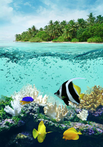 Snorkeling Photograph - Underwater Life In Tropical Sea by Narvikk