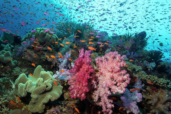 Underwater Photograph - Underwater Scenic by Stephen Frink