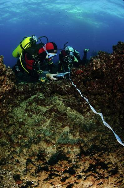 Diving Suit Photograph - Underwater Survey by Photostock-israel