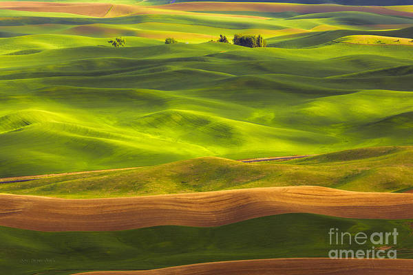 Photograph - Undulation  by Beve Brown-Clark Photography