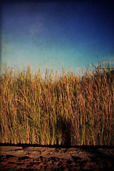 Cattails Wall Art - Photograph - Unexpected Things by Laurie Search