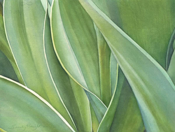 Wall Art - Painting - Unfolding Tulip Leaves by Sandy Haight
