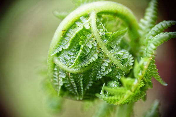Photograph - Unfurling by Peggy Collins