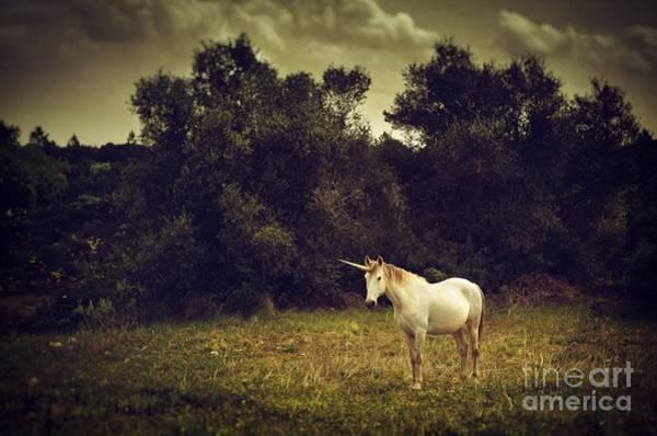 Unicorn Wall Art - Photograph - Unicorn by Carlos Caetano