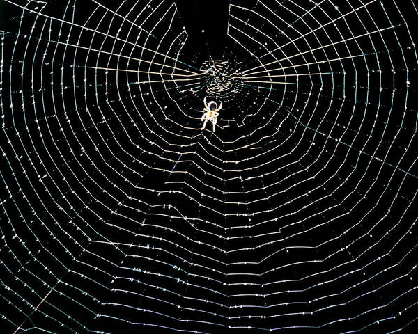 Orb Photograph - Unidentified Spider At Centre Of Its Orb Web by Adam Hart-davis/science Photo Library