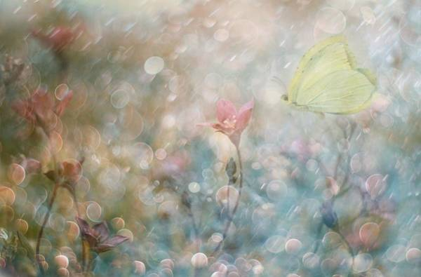 Pastel Photograph - Uninterrupted Poetry... by Delphine Devos