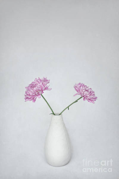 Aster Photograph - United by Evelina Kremsdorf