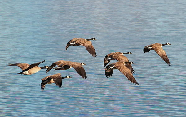 Photograph - United We Fly by Rima Biswas