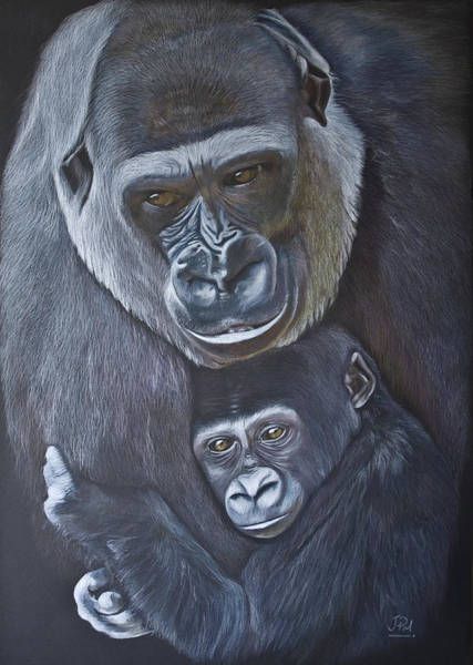 Baby Gorilla Painting - United - Western Lowland Gorillas by Jill Parry