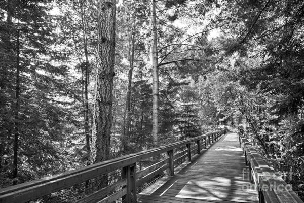 University Of California Santa Cruz Walkway Art Print