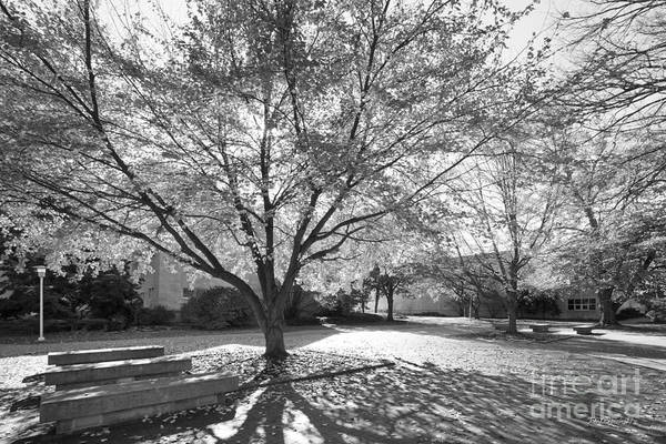 Photograph - University Of Evansville Landscape by University Icons