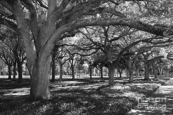 Photograph - University Of South Florida Landscape by University Icons