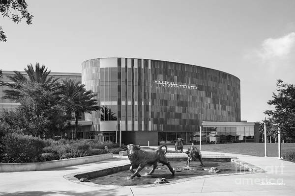 Photograph - University Of South Florida Marshall Student Center by University Icons