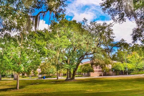 University Of West Florida Photograph - University Tree by Jon Cody