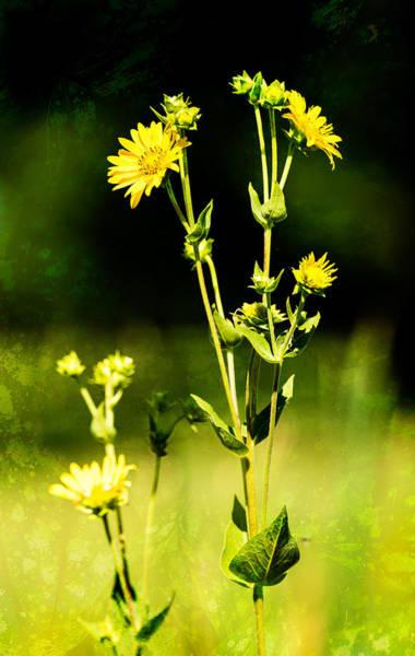 Photograph - Unknown Yellow Wildflower by  Onyonet  Photo Studios