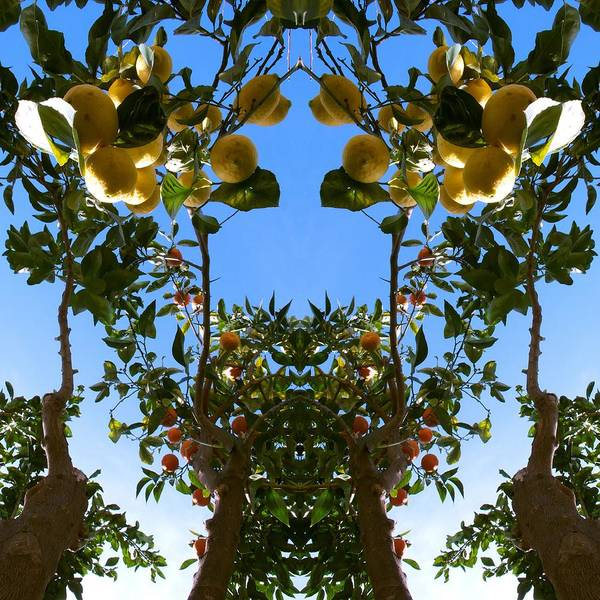 Fruit Tree Photograph - Unnatural 78 by Giovanni Cafagna