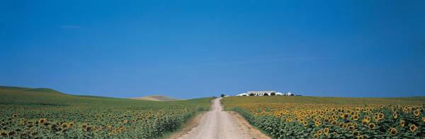 Unpaved Road Andalucia Spain Art Print