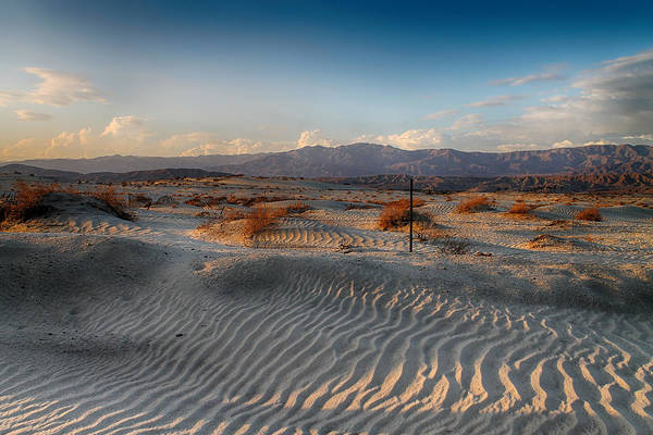 Palm Desert Photograph - Unspoken by Laurie Search