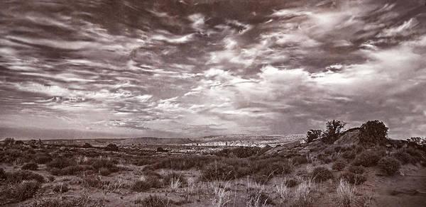 Photograph - Untamed by Leda Robertson