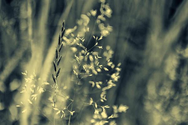 Photograph - Untitled #100 by Roberto Pagani