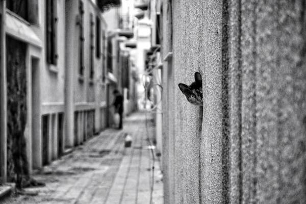 Alley Wall Art - Photograph - Untitled by Ali Ayer
