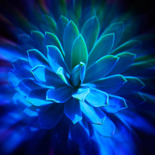 Photograph - Untitled Blue Cactus by Julian Cook