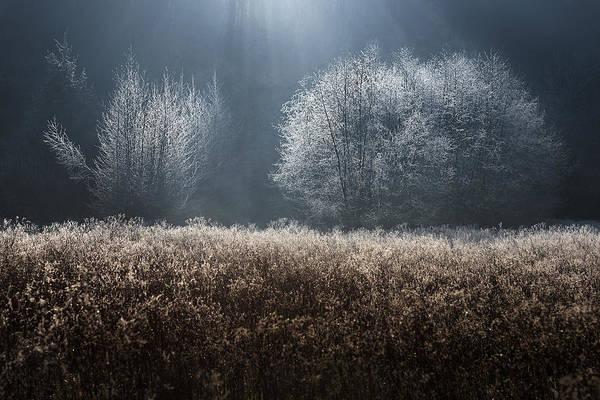 Bush Photograph - Untitled by Kristjan Rems