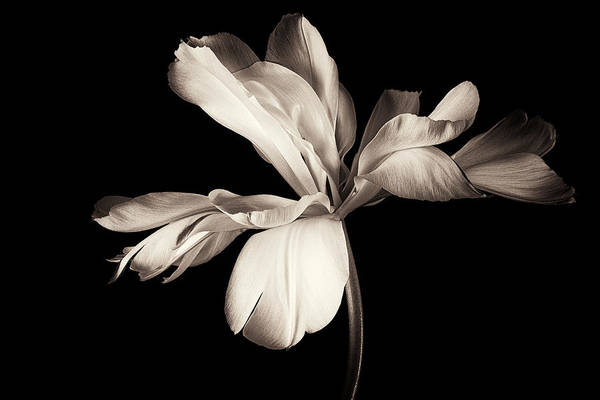 Simple Life Photograph - Untitled by Penny Myles