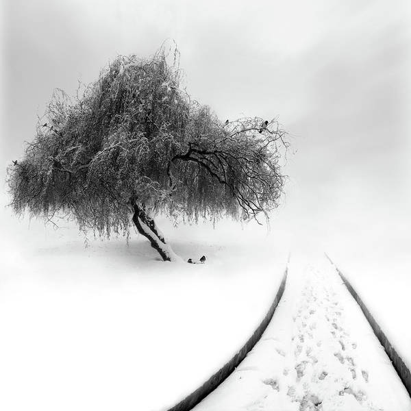 Lonely Photograph - Untitled by Sherry Akrami