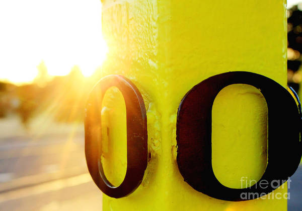 Photograph - Uo 6 by Michael Cross