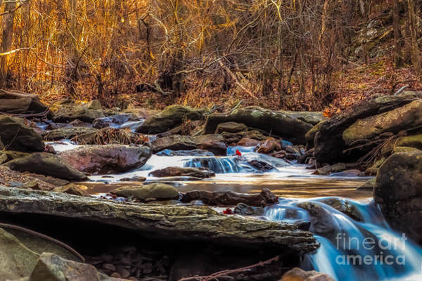 Photograph - Up A Creek by Larry McMahon