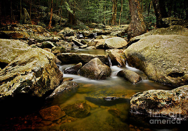 Photograph - Up A Creek by Mark Miller