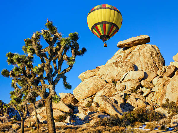 Yucca Palm Photograph - Up And Over At Joshua Tree 2 by Dominic Piperata