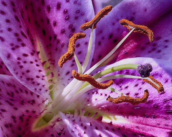Photograph - Up Close by Wayne Wood
