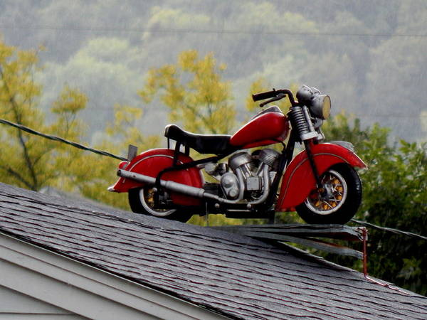 Photograph - Up On The Roof by Wild Thing