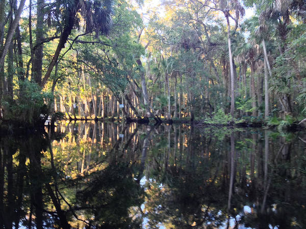 Wall Art - Photograph - Up Spruce Creek by Tommy and Pamela Allen