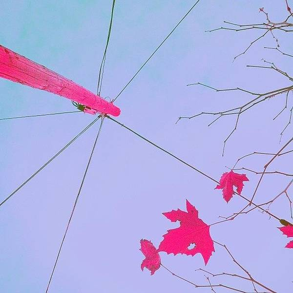 Minimalism Photograph - Up, Up, And Away! by Courtney Haile