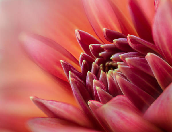 Photograph - Uplifting by Mary Jo Allen