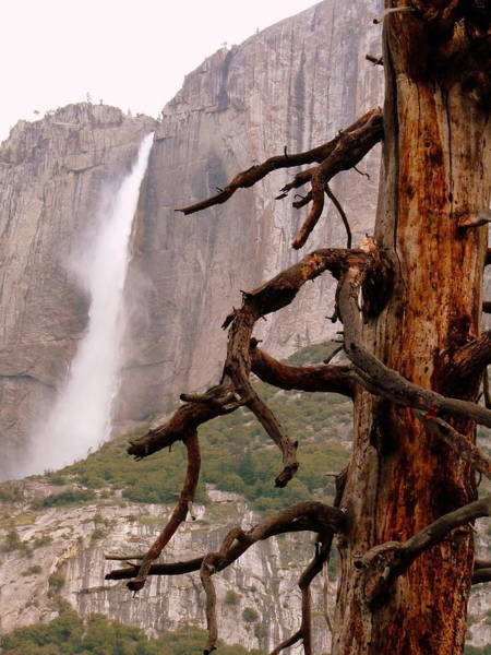 Photograph - Upper Yosemite Falls Dead Tree by Jeff Lowe